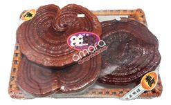 Cửa hàng bán nấm linh chi Hàn Quốc uy tín tại TPHCM