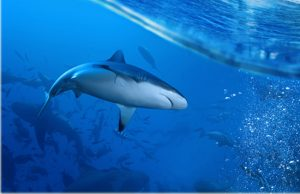 Dầu gan cá mập sự lựa chọn thông minh cho sức khỏe