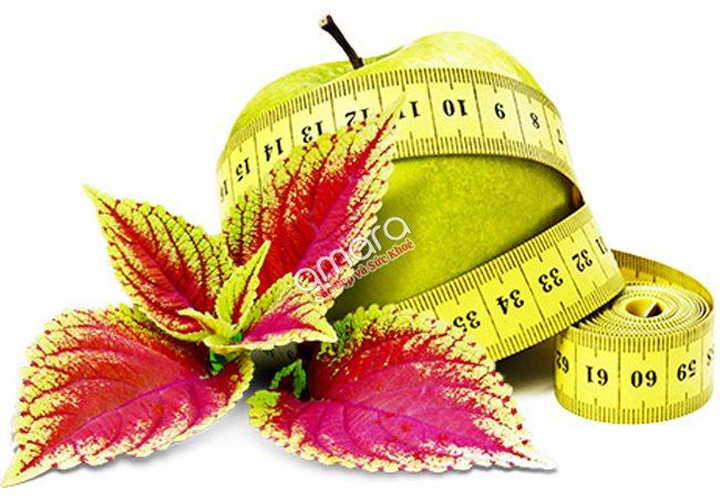 Viên giảm cân Forskolin Body