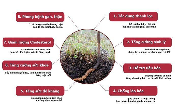 lợi ích của đông trùng hạ thảo