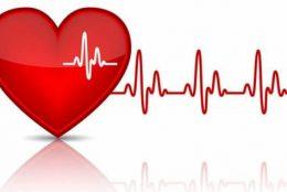 nhịp tim của người bình thường