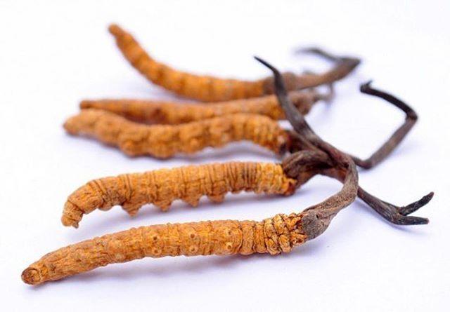 viên đông trùng hạ thảo kanghwa